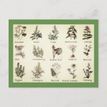 Herbs and Spices full color illustrations postcard