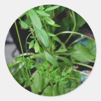 Herbs Classic Round Sticker