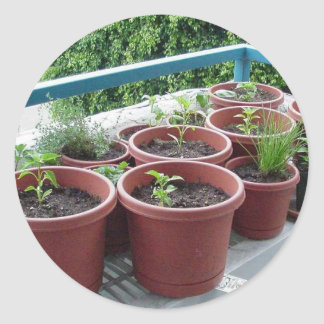 Herbs Spices Peppers Home Garden Classic Round Sticker