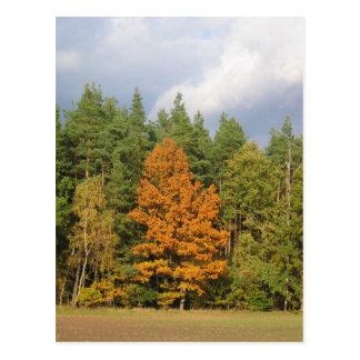 Herbst Postcard