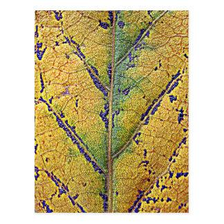 Herbstblatt - by AbBe Postcard