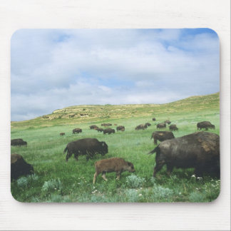 Herd of bison graze prairie grass at Theodore Mouse Pad