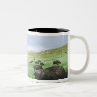 Herd of bison graze prairie grass at Theodore Two-Tone Coffee Mug
