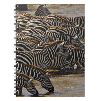 Herd of Burchell's Zebras drinking from Mara Notebook