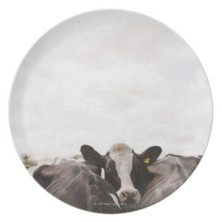 Herd of cattle and overcast sky 2 dinner plate
