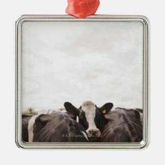 Herd of cattle and overcast sky 2 square metal christmas ornament