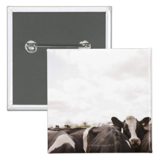 Herd of cattle and overcast sky button