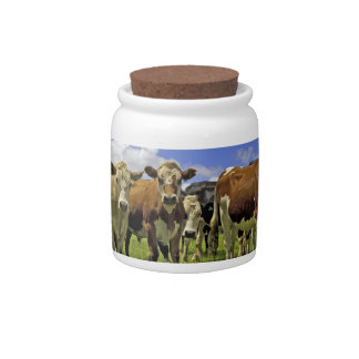 Herd of cattle and overcast sky candy dish