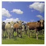 Herd of cattle and overcast sky ceramic tile