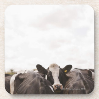 Herd of cattle and overcast sky beverage coaster