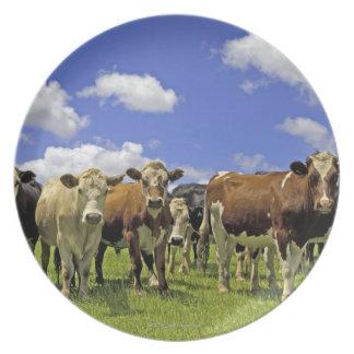 Herd of cattle and overcast sky dinner plate