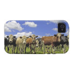 Herd of cattle and overcast sky iPhone 4/4S case