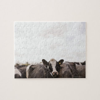 Herd of cattle and overcast sky jigsaw puzzle
