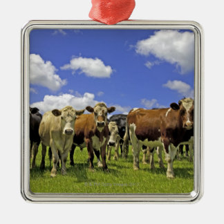 Herd of cattle and overcast sky square metal christmas ornament