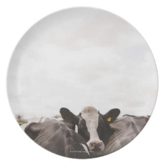 Herd of cattle and overcast sky plate