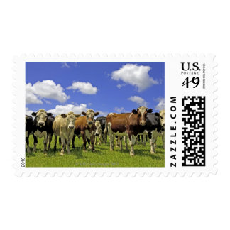 Herd of cattle and overcast sky postage stamp