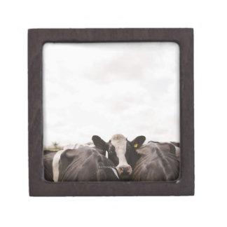 Herd of cattle and overcast sky premium keepsake boxes