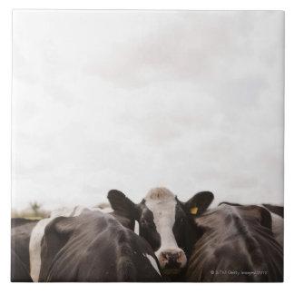 Herd of cattle and overcast sky tile