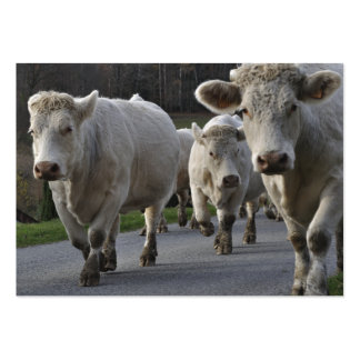 Herd of Charolais beef cattle Large Business Card