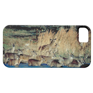 Herd of deer 2 iPhone SE/5/5s case