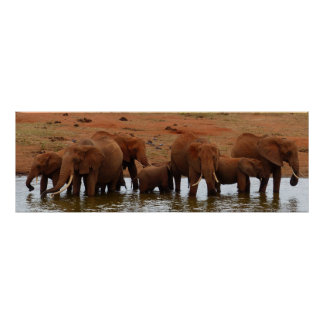 Herd of Elephants at a Water Hole Poster