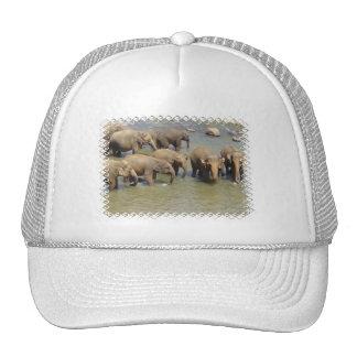 Herd of Elephants Baseball Hat
