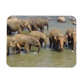 Herd of Elephants Flexible Magnet Vinyl Magnets