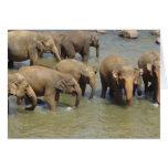 Herd of Elephants Greeting Cards