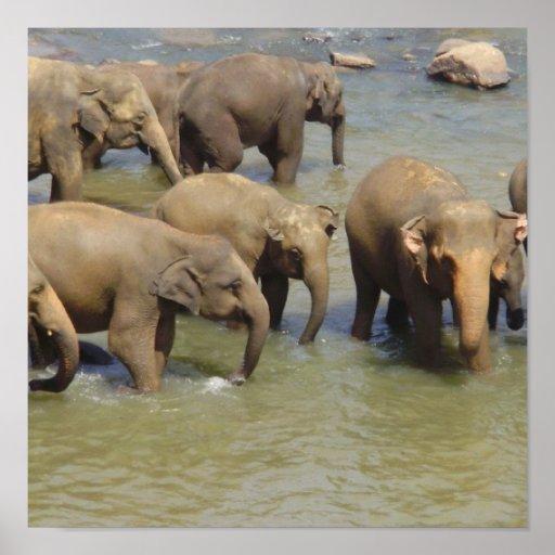 Herd of Elephants Poster