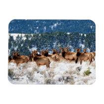 Herd of Elk Flexible Photo Magnet