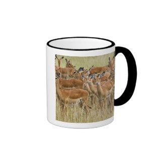 Herd of female Impala, Masai Mara, Kenya. Ringer Coffee Mug