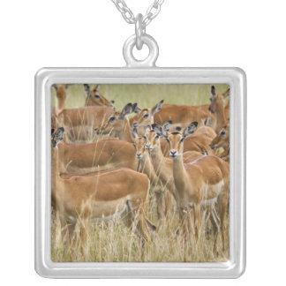 Herd of female Impala, Masai Mara, Kenya. Square Pendant Necklace
