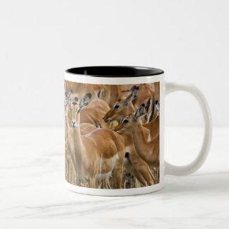 Herd of female Impala, Masai Mara, Kenya. Two-Tone Coffee Mug