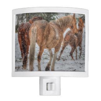 Herd of Horses, Dun, Palomino Paint Equine Photo Night Lites