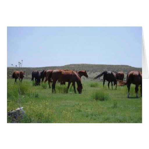 Herd of Horses - Logan County, Kansas Greeting Card