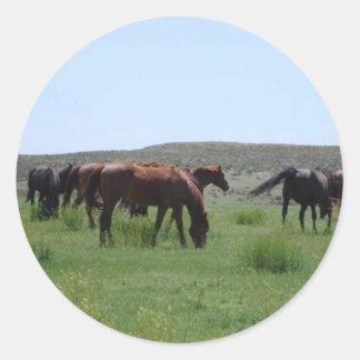 Herd of Horses - Logan County, Kansas Classic Round Sticker