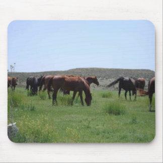 Herd of Horses - Logan County, Kansas Mouse Pad