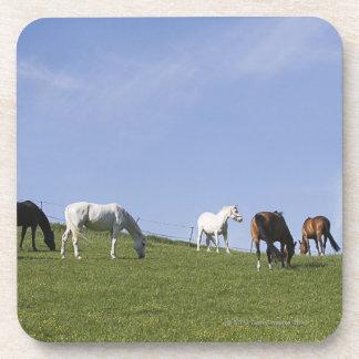 herd of horses on meadow coaster