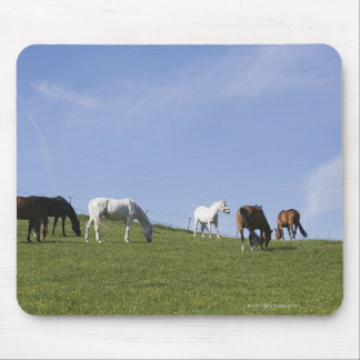 herd of horses on meadow mouse pad