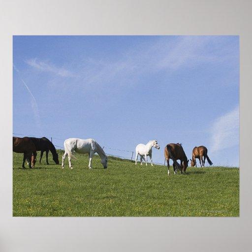 herd of horses on meadow poster