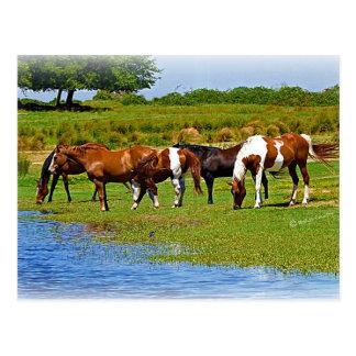 Herd of Horses Postcard