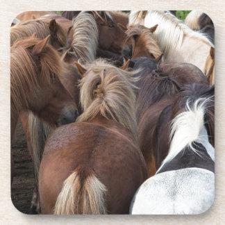 Herd of Icelandic horse Coaster
