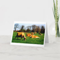 HERD OF JERSEY COWS CARD