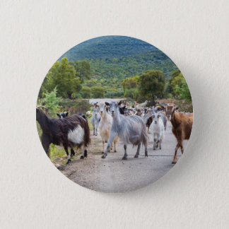 Herd of mountain goats walking on road button