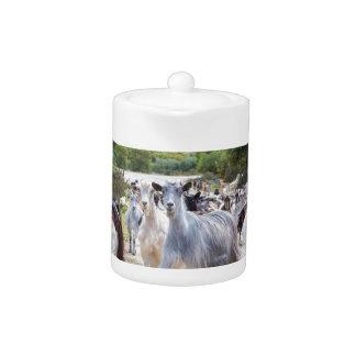 Herd of mountain goats walking on road teapot