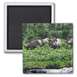 Herd of Rams Magnet