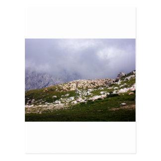 Herd of sheep at the Lake Garda Postcard