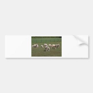Herd of sheep bumper sticker