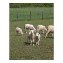 Herd of sheep letterhead