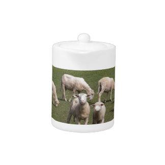 Herd of sheep teapot